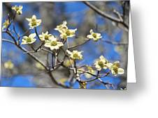 Dogwood In Bloom Greeting Card