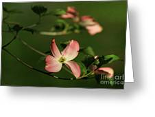 Dogwood In Pink Greeting Card