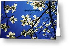 Dogwood In The Sky #2 Greeting Card