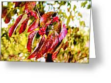 Dogwood Leaves Greeting Card