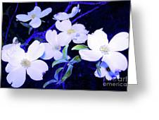Dogwood Night Blooms Greeting Card