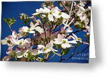 Dogwood Sky Greeting Card