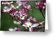 Dogwood Tree Greeting Card