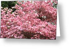 Dogwood Tree Flowers Art Prints Canvas Pink Dogwood Greeting Card