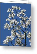 Dogwood Tree In Spring Greeting Card