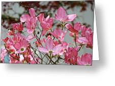 Dogwood Trees Flower Blossoms Art Baslee Troutman Greeting Card
