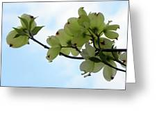 Dogwoods Facing The Sky Greeting Card