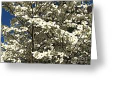 Dogwoods In Bloom Greeting Card