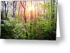Dogwoods In The Forest Greeting Card
