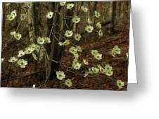 Dogwoods In The Spring Greeting Card