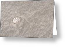 Dollar In The Sand Greeting Card