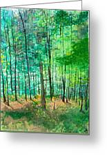 Dolly Sods Trees Greeting Card