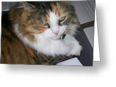 Dolly The Grumpy Cat Greeting Card