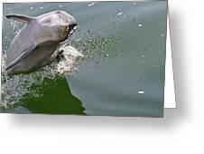 Dolphin At Play Greeting Card