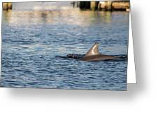 Dolphin By The Dock Greeting Card