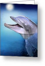 Dolphin In The Moonlight Greeting Card