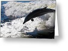 Dolphin Jump Greeting Card