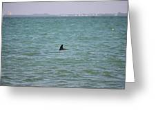 Dolphin Makes An Appearance Greeting Card