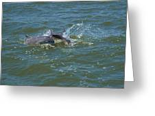Dolphin Race Greeting Card