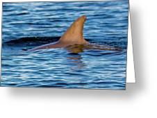 Dolphin Sighting Greeting Card