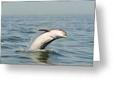 Dolphin Splash Greeting Card