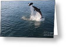 Dolphin Watch Greeting Card