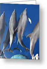 Dolphin2 Greeting Card