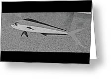 Dolphinfish In Grayscale Greeting Card