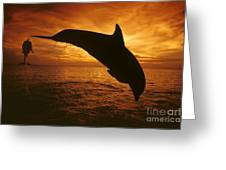 Dolphins And Sunset Greeting Card