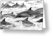 Dolphins On The Run Greeting Card