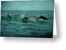 Dolphins Greeting Card by Sandy Keeton
