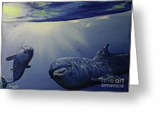 Dolphins Underwater Game Greeting Card
