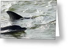 Dolpins In Estero Bay Greeting Card