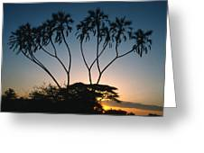 Dom Palms In Kenya Greeting Card