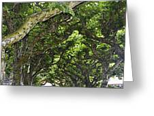 Dome Of Trees Greeting Card