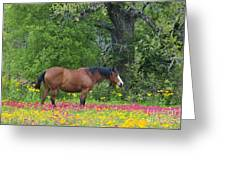 Domestic Horse In Field Of Wildflowers Greeting Card
