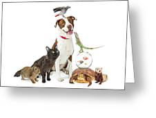 Domestic Pets Group Together With Copy Space Greeting Card