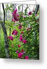 Domestic Rose Gone Wild Greeting Card