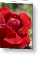 Dominica Red Rose Greeting Card