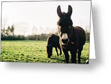 Donkey And Pony Greeting Card