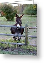 Donkey At The Fence Greeting Card