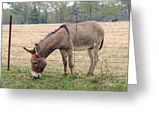 Donkey Finds Greener Grass Greeting Card