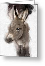 Donkey Foal No 02 Greeting Card