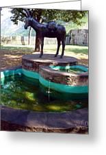 Donkey Fountain Greeting Card