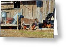 Donkey Goat And Chickens Greeting Card