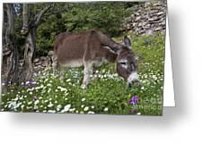 Donkey Grazing In Greece Greeting Card