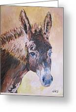 Donkey In The Sunlight Greeting Card