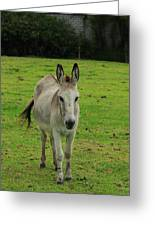 Donkey On A Farm Greeting Card