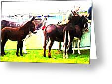 Donkeys At Mullaghmore Greeting Card