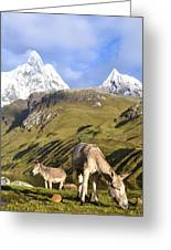 Donkeys Grazing In The Mountains Greeting Card